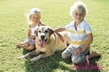 Лабрадор – это идеальная собака для семьи.