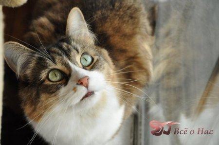 Кошка в доме, какую пользу она приносит?